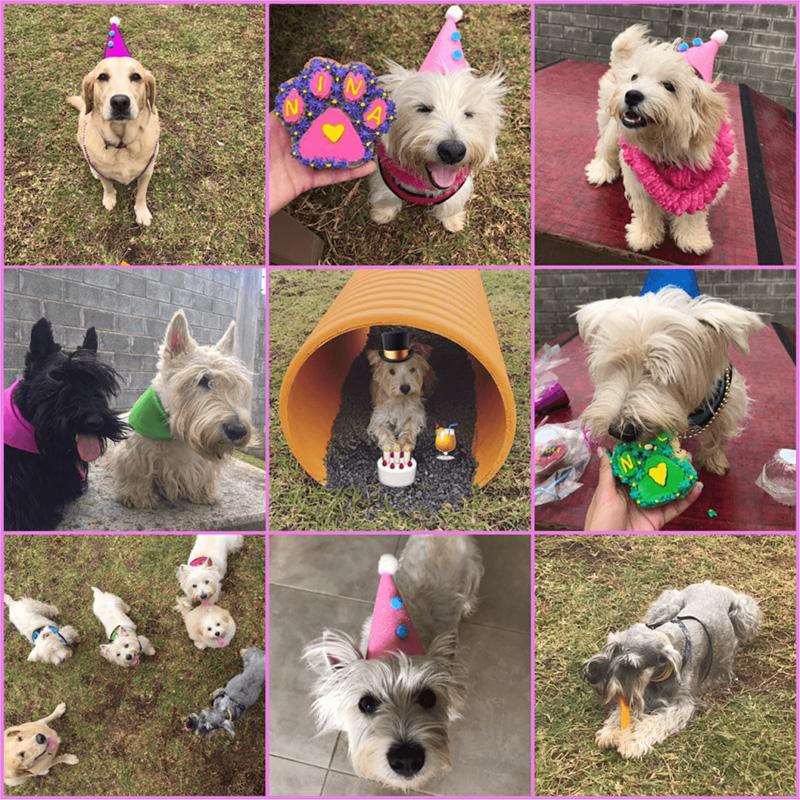 celebracion-perros